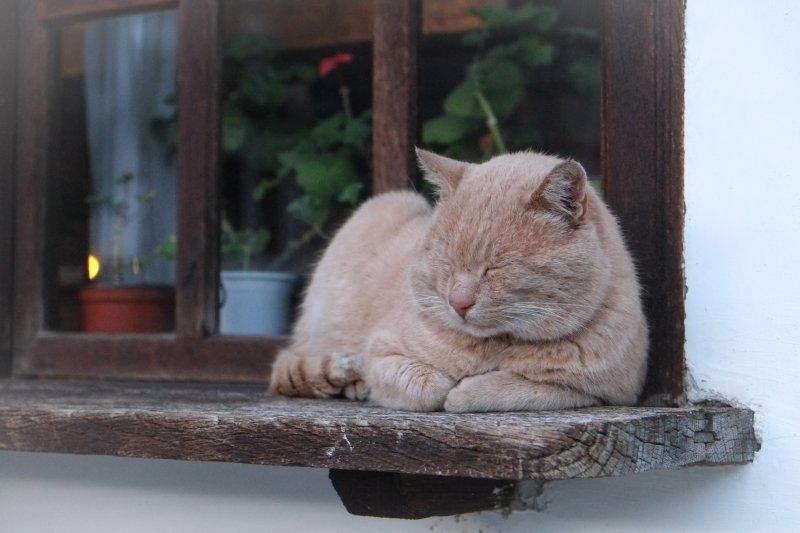 一旦確認為貓血栓症候群,需立即進行治療!(圖/Yanko Peyankov@Unsplash)