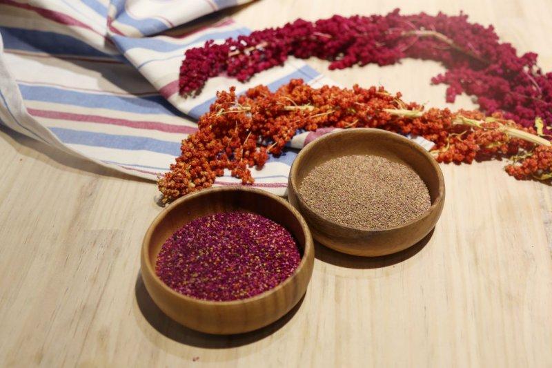 台灣紅藜是台灣原生植物,更是原住民利用逾百年的傳統穀類作物,可以說是「台灣之光」。(取自信豐農場網站)