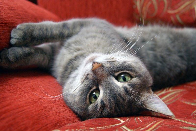 貓咪腎臟病罹患的最常見主因為飲食不當或身體老化所致,飼主應多加注意。(圖/eva-ufa@pixabay)