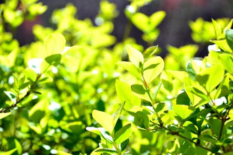綠色思考有時是一種反直覺思考,但是這會讓你得到新的眼界,看見全新的世界(圖/jadepalmer@flickr)