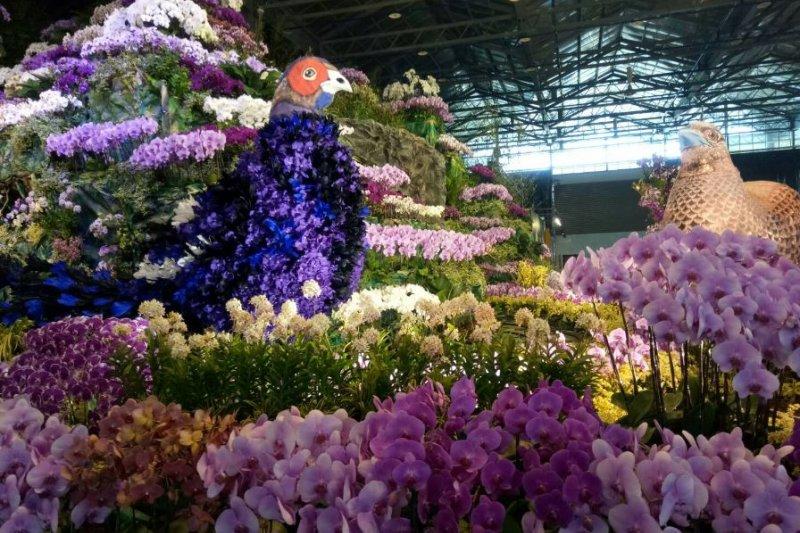 2017-03-02-2017台灣蘭展即將開幕-問於爭奇館中的帝雉造型蘭花也是一大亮點-取自蘭展官網