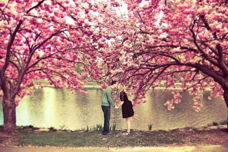 這些賞櫻地點保證讓你的照片畫面浪漫的不得了!(圖/KLOOK客路提供)