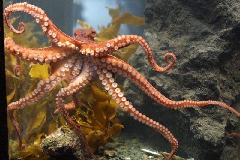 章魚。(圖/遠見雜誌提供)