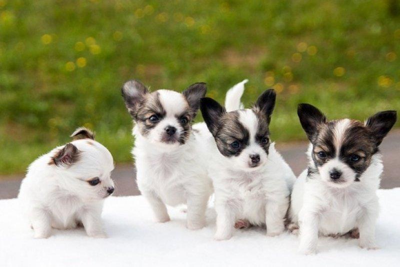 你知道按照聰明動物的排行,狗是在第幾名嗎?(圖/遠見雜誌提供)