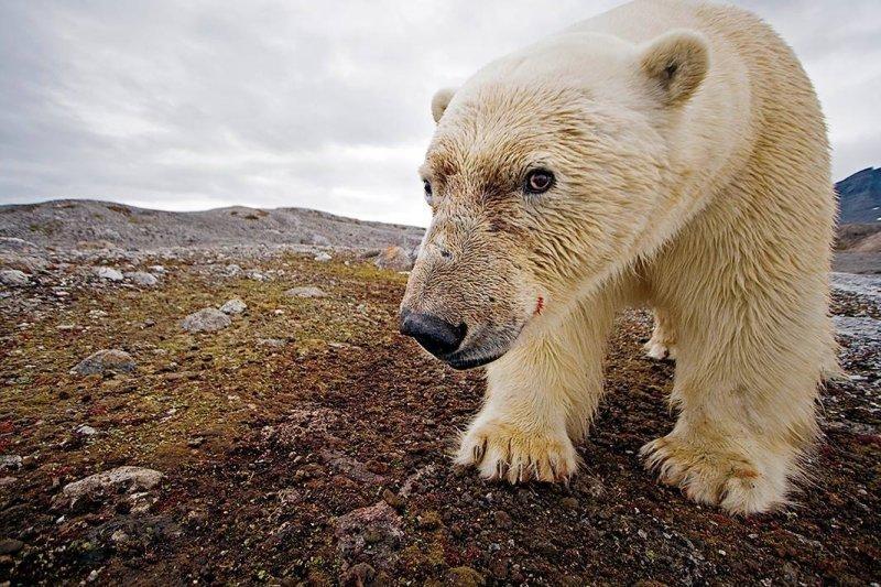 全球暖化使北極冰層快速減少。(圖/Save the Arctic)