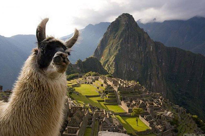 在祕魯欣賞遺址時,得注意身旁的羊駝。(圖/Will Burrard-Lucas @flickr,Klook客路提供)