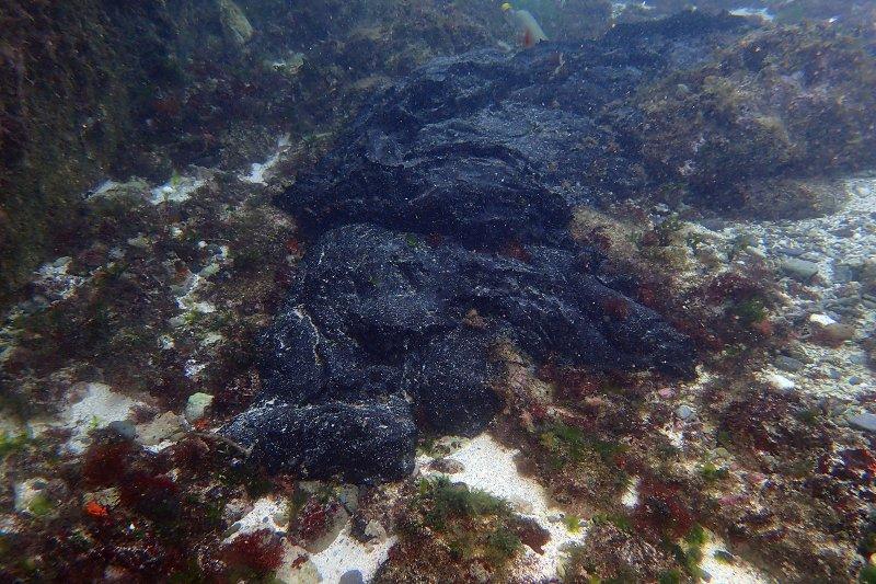 貨櫃船偷排重油,綠島生態浩劫(環保署)