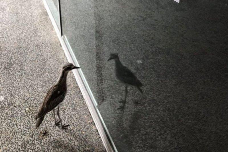 野生動物學家雷納在玻璃窗上貼了一張以野鳥口氣書寫的字條。(BBC中文網)