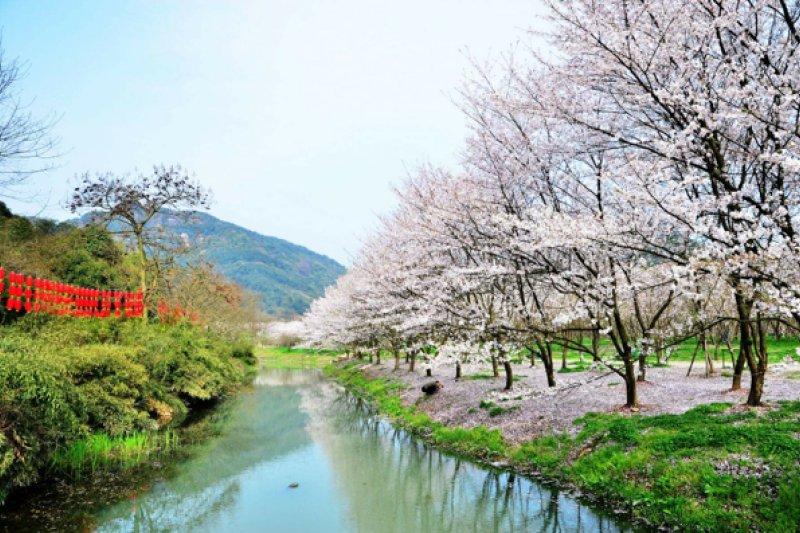 作者指出,一九六八年,當全世界的年輕人都在盛開的櫻花樹下快樂發瘋的時候,台灣的所有人卻處在「幫隔壁國共內戰敗北的國民黨擦屁股」的無聊壓抑中。(資料照,澎湃新聞提供)
