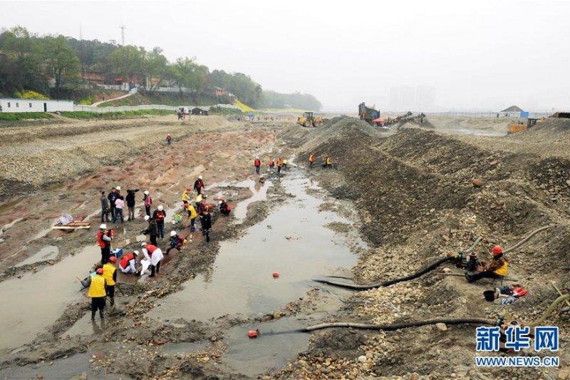 四川省眉山市彭山區岷江河段的挖掘現場。(新華社)
