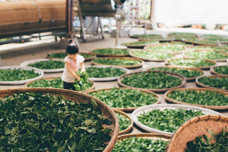 每天來上一杯茶葉泡的新鮮茶飲,竟然能預防失智症!(圖/Pixabay)