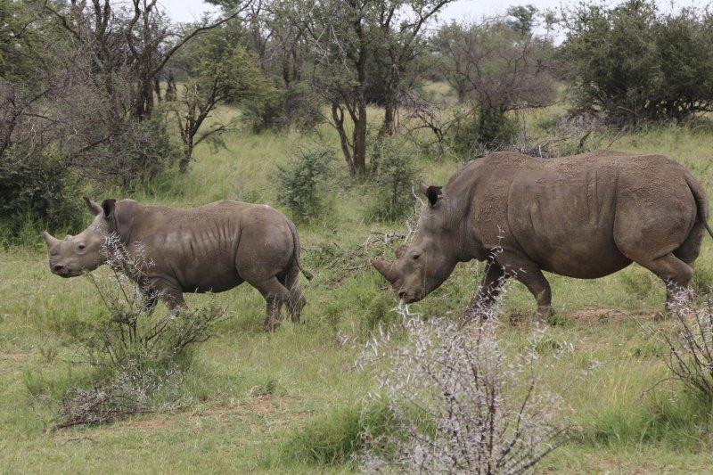犀牛角成分和人類的毛髮及指甲一樣只是蛋白質(AP)