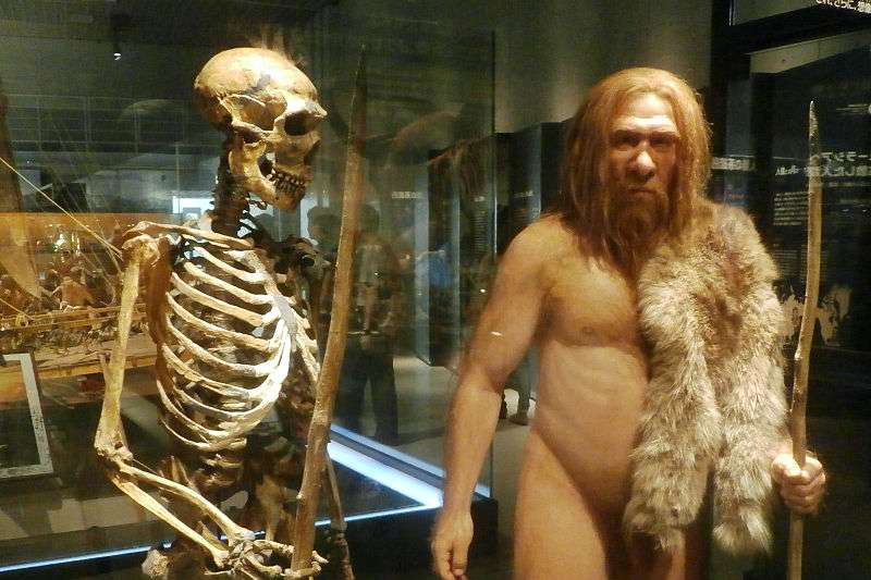 日本國立科學博物館展示重建的男性尼安德塔人(Photaro@Wikipedia/CC BY SA-3.0)