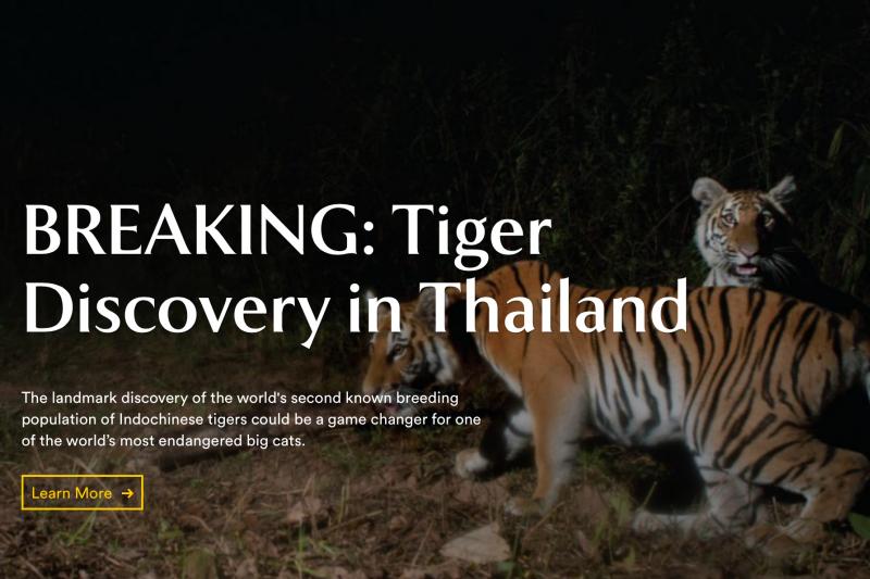 泰國東部叢林設置的相機2016年拍到4隻母老虎和6隻小老虎,證實是瀕臨絕種的印度支那虎,保育人士28日大讚這是唯恐將因盜獵而絕跡物種的「奇蹟般」勝利。