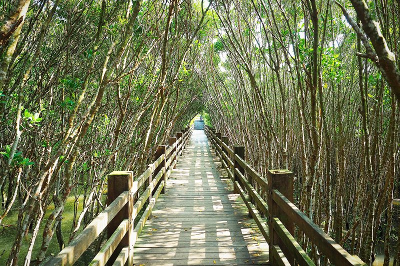 這麼幽靜的紅樹林美景,猜猜在哪裡?(圖/pang yu liu@Flickr)
