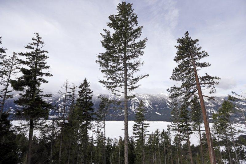 植物,樹木(AP)
