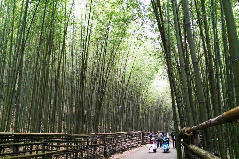 苗栗泰安的烏嘎彥「綠色隧道」風景非常美麗,有「台灣版嵐山」的美譽!(圖/蔡志明@Facebook)