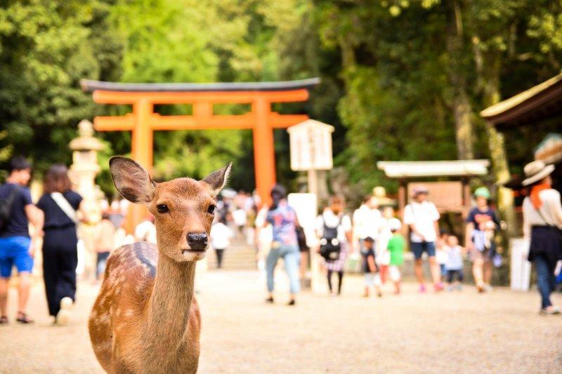 除了大名鼎鼎的東大寺,奈良其實還有許多美麗景點!(圖/Fast Japan提供)