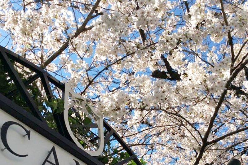 不想在櫻花樹下卡位,不如訂家餐廳優雅的用餐賞櫻。(圖翻攝自/CANAL CAFE@facebook)