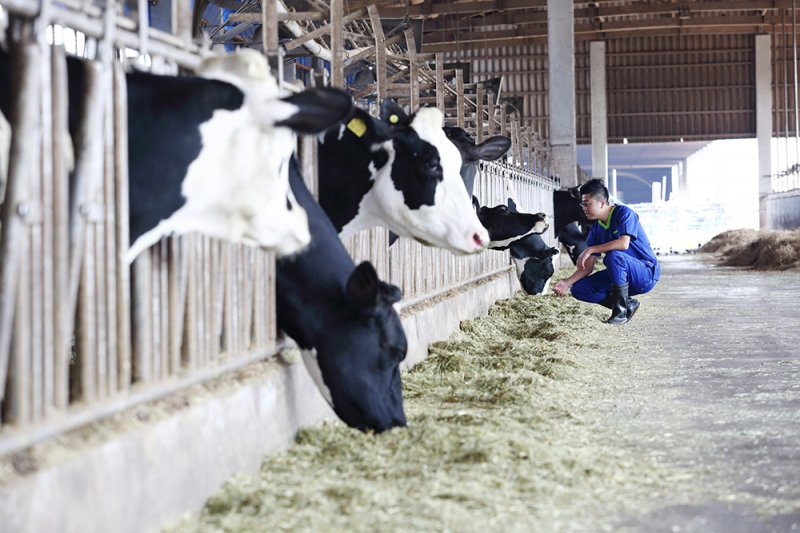 想做一件事情,一定能找到方法。在經年累月的牧場診療工作後,龔建嘉以自身開始,為酪農產業找到永續發展的可能性。(圖/小日子提供)