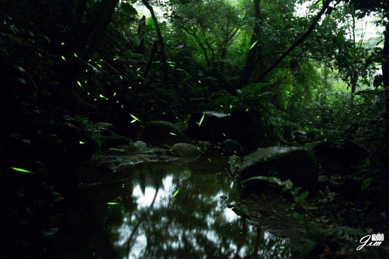 點點螢火在樹林間飛舞,點綴的眼前話面美不勝收。(圖/新北市政府客家事務局提供)