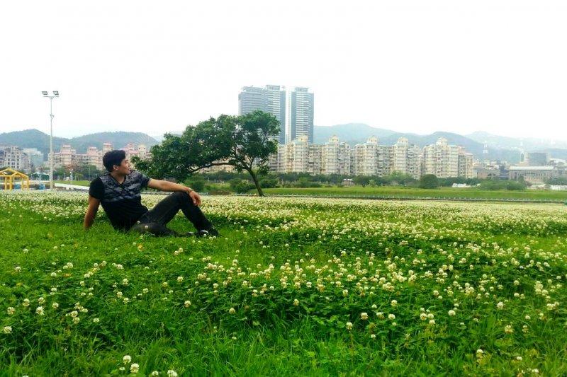 台北市水利處表示,每年的4-5月,野生的白花三葉草便在河濱公園恣意盛開,朵朵白色小花球爭相團簇開放。(台北市政府提供)