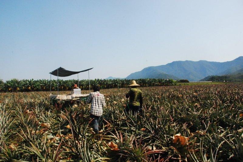 要從小農變成大農,除了可以透過購買或租借土地來經營單一大面積的農場之外,也可以透過合作社形式,集結理念相同的農民,共同採購機具、種苗來降低生產成本。(圖由作者提供)
