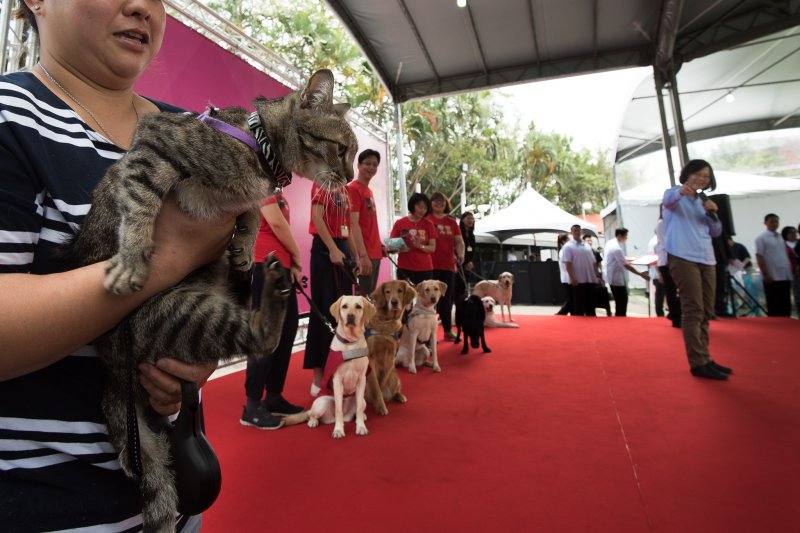 五二0就職周年,蔡英文總統取消公開活動,在官邸招待小朋友並介紹去年領養的3隻退役導盲犬與「全官邸最兇」的貓咪蔡想想。(總統府提供)