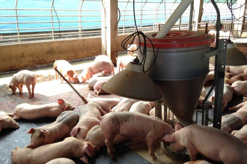 世界動物衛生組織(OIE)年會昨(21)日召開,台灣本島、澎湖、馬祖確定列為豬隻口蹄疫「施打疫苗非疫區」,25日將領取官方證書。(取自雲林縣政府官網)