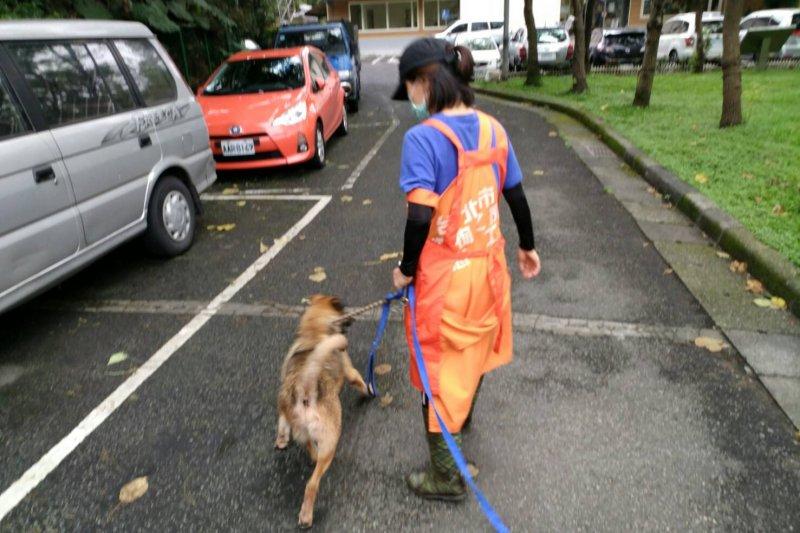 座落在已綠化的垃圾山的台北市動物之家,每天下午都會看到個嬌小身影穿梭於動物舍之間,這是動物之家資深的志工蘭姐。(北市動保處提供)
