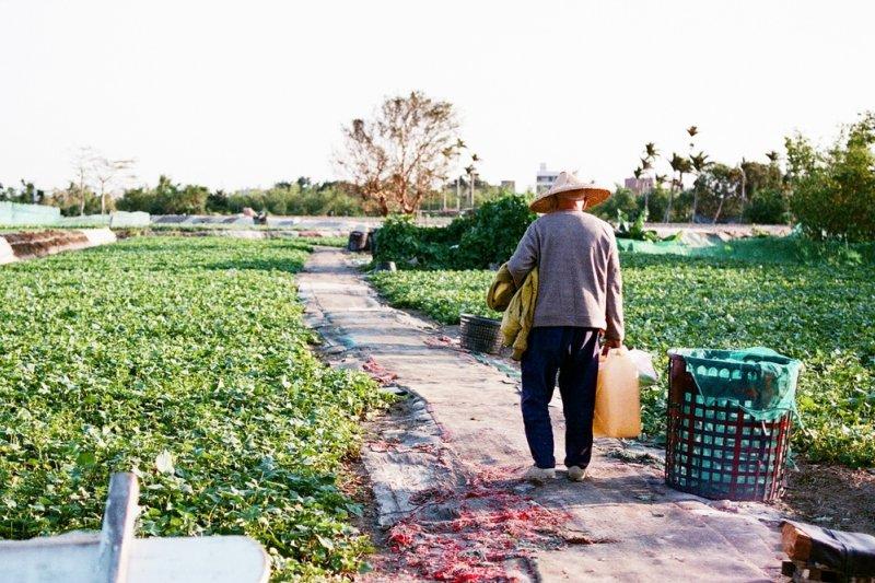 這些一輩子在都市長大生活的同學們,為何要來上農耕課?(示意圖/Toomore Chiang@flickr)