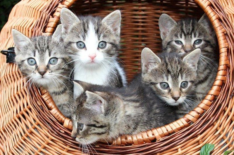 新手貓奴剛開始照顧貓咪,需要注意的事項可要好好準備!(圖/寵毛網)