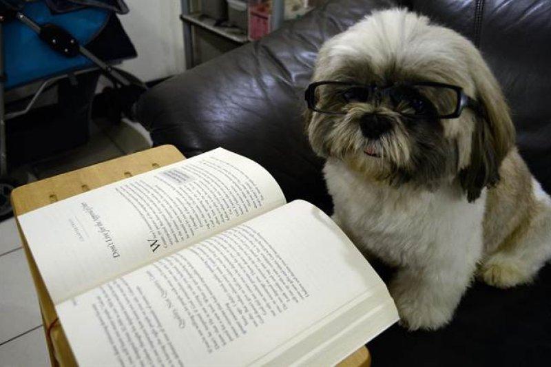 呼呼:「不懂狗狗,就要多看動物行為的書呀!」(圖片來源/西施犬呼呼與星米花)