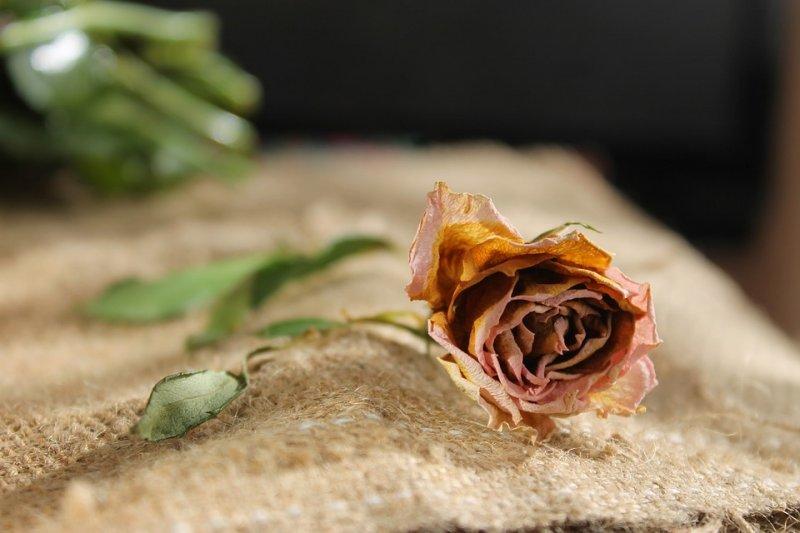 生前再如何風光神氣,最後都難逃一死,人一旦死亡,不過只是一堆腐肉爛骨...(圖/vargazs@pixabay)