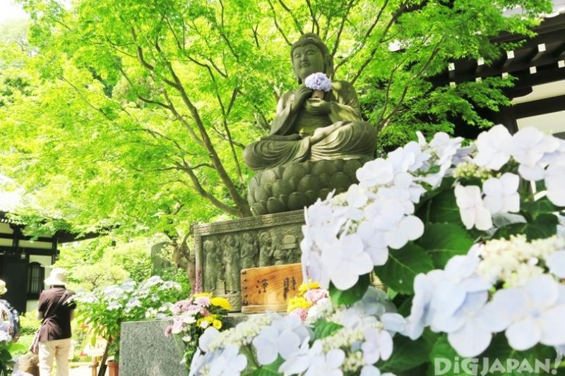 長谷寺觀音堂的後山,可以看到滿山的紫陽花花谷,是鎌倉紫陽花的熱門景點之一喔!(圖/DiGJAPAN!)
