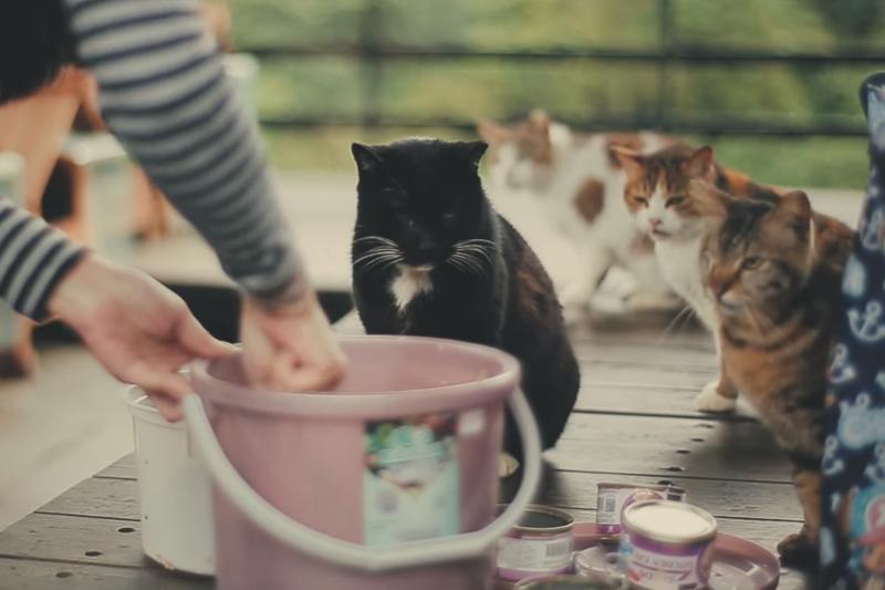 來自廈門理工學院的5位大陸交換生,在猴硐貓村被默默關愛流浪貓的善心人士感動,拍攝貓村紀錄片《貓‧喃》。(圖/世新電視台@youtube)