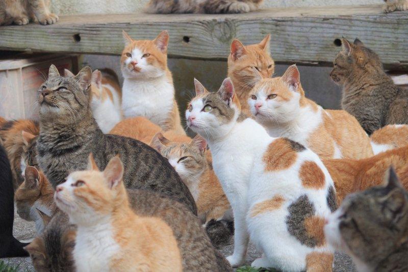貓在埃及時代出現是眾所周知的事,但科學家發現,古代貓科還跟另一個神祕部落有關。(圖/Sayoko Shimoyama@flickr)