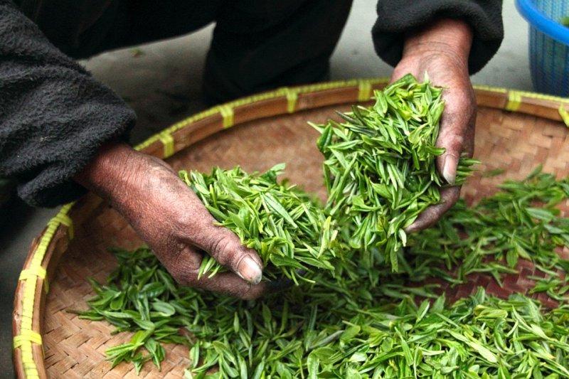 從茶葉到超商裡的瓶裝茶,你知道其中經過多繁雜的步驟嗎?(圖/Pixabay)