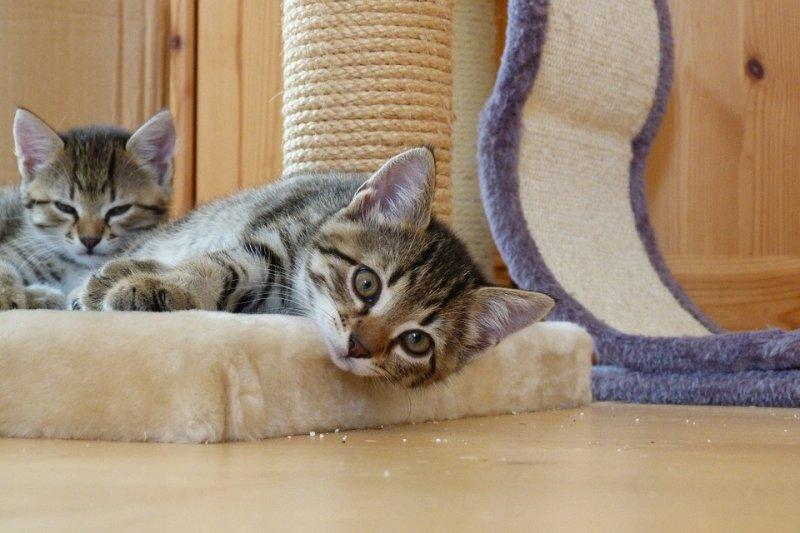 飼主也應切記千萬別喜新厭舊,新舊貓咪不論手心手背都是肉,都必須好好愛護牠們才行(圖/MilouRost@pixabay)