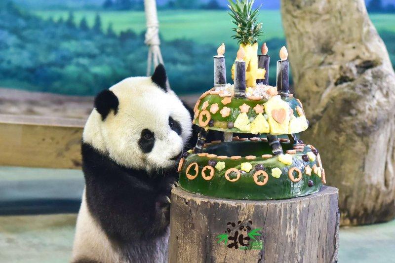 大貓熊「圓仔」過生日!(資料照,取自台北市政府網站)