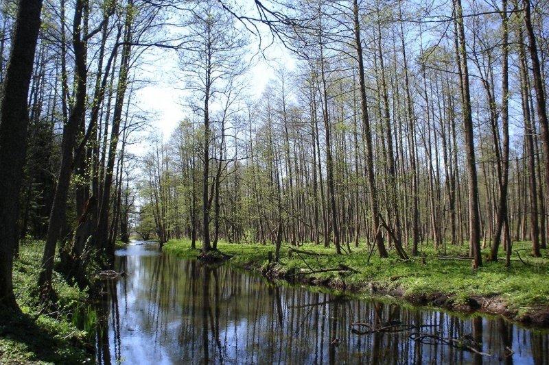 比亞沃維耶扎原始森林(Robert Wielgórski a.k.a. Barry Kent@Wikipedia/CC BY-SA 3.0)