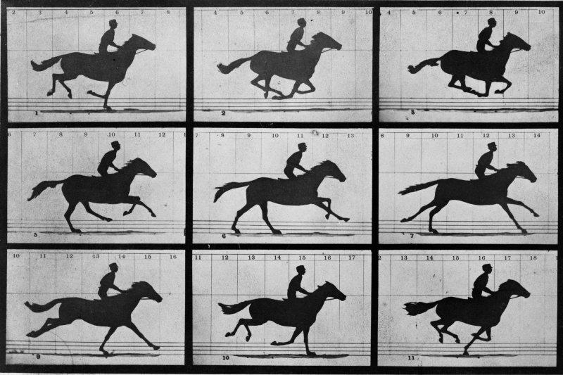 哈佛大學的研究員運用近年最熱門的基因編輯技術將影片存入大腸桿菌的基因中。(圖/維基百科)