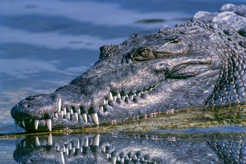 鱷魚竟將謝里夫丁的屍體送回岸邊,且屍體完好無缺,沒有被其他鱷魚吃掉。(圖/Pexels@pixabay)