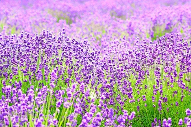 關西5大有名的賞花景點,包含了大阪、京都、兵庫、奈良。(圖/FAST JAPAN)