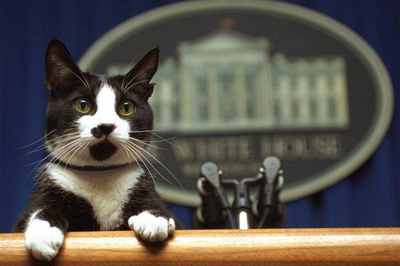 美國前總統柯林頓的寵物貓(AP)