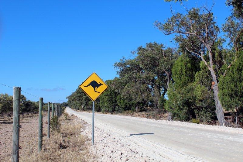澳洲目前的延簽制度導致許多打工度假者遭到雇主不當剝削(取自Pixabay)