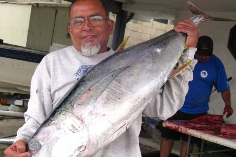 美國南加州漁民展示即將處理的鮪魚(美國之音記者國符拍攝)