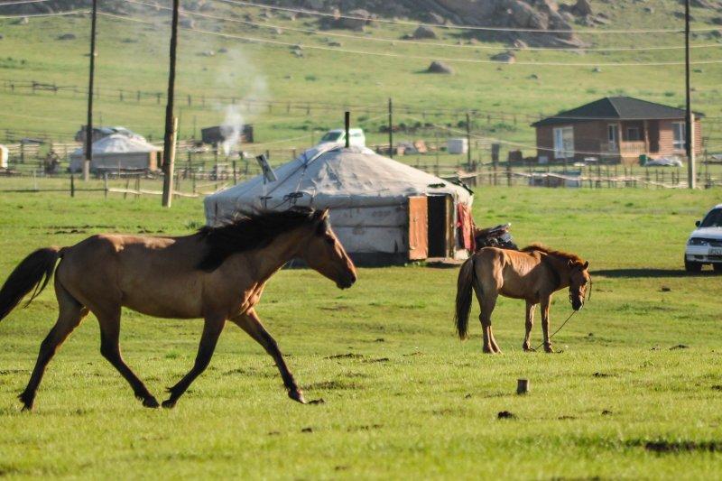 作者指出,蒙古與台灣雖有相同處境,但蒙古人從未認為自己國家將滅亡,反而台灣明明越看越好,卻總認為自己將滅國。(圖/Erdenebayar@pixabay)