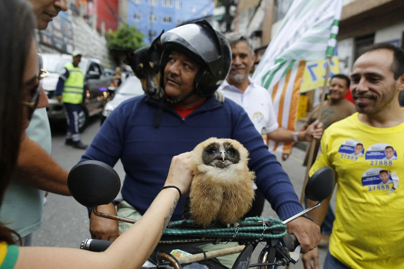 巴西,路人撫摸一名男子的寵物貓頭鷹。(美聯社)