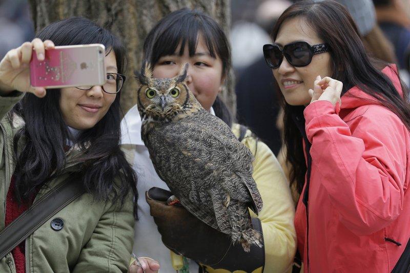 日本路人與貓頭鷹咖啡廳的貓頭鷹合照。(美聯社)